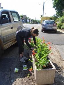 Marie plante